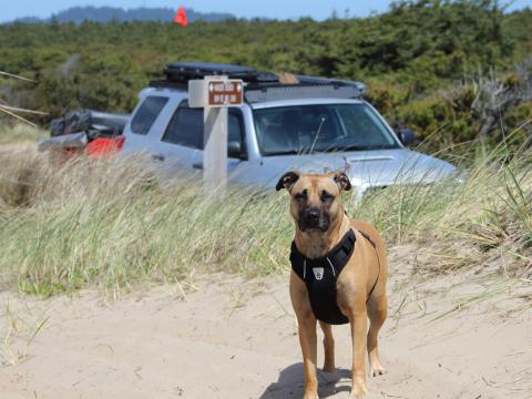 5th gen 4Runner overlanding North America - Sand Dunes with Dog, Oregon Coast