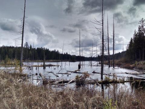 oliphant lake