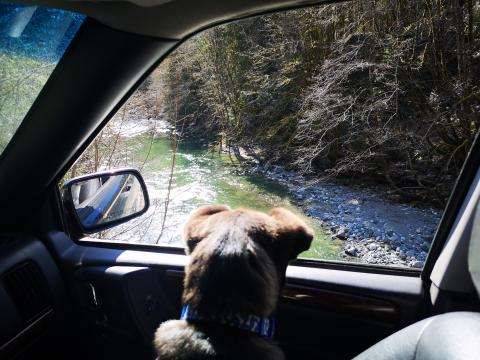 Pup's first off-roading trip