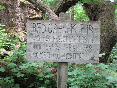 Sign beside the tree
